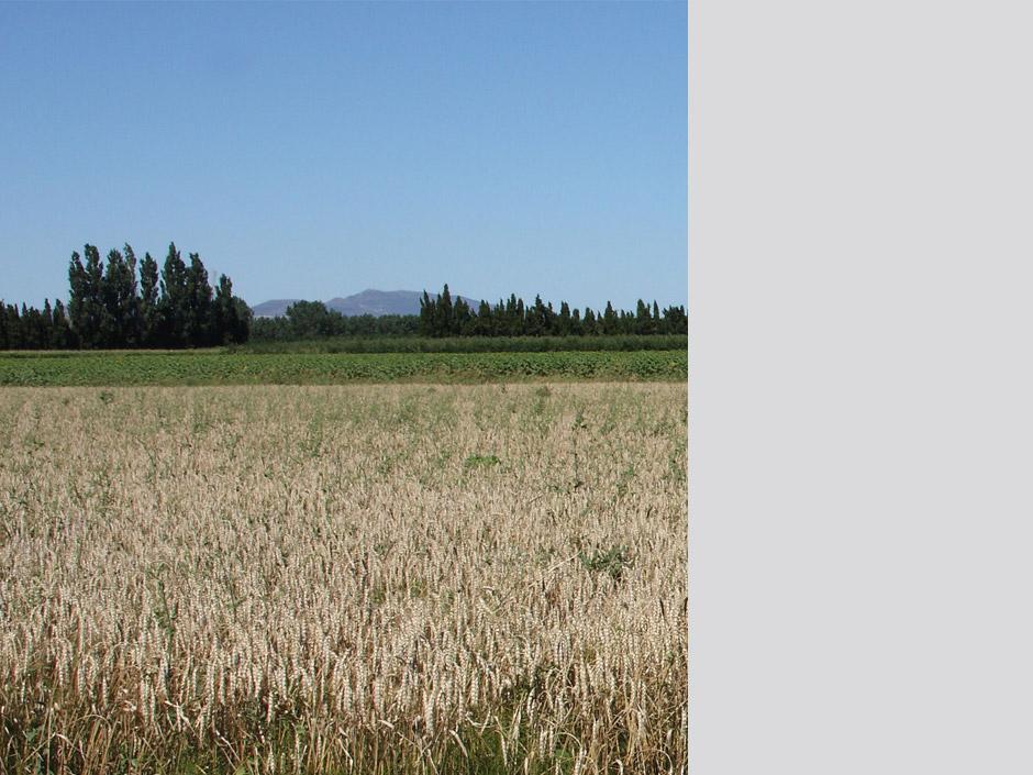 Els camps de cereal, el seu nou hàbitat